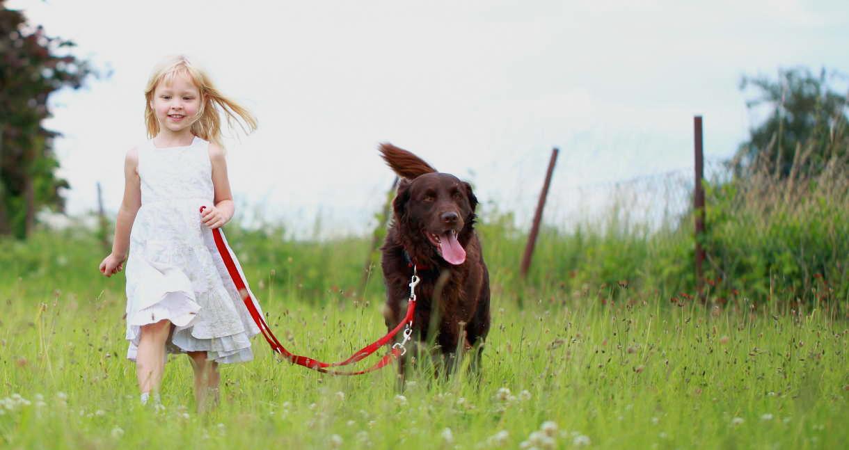 Mag mijn hond loslopen in het natuurgebied ?